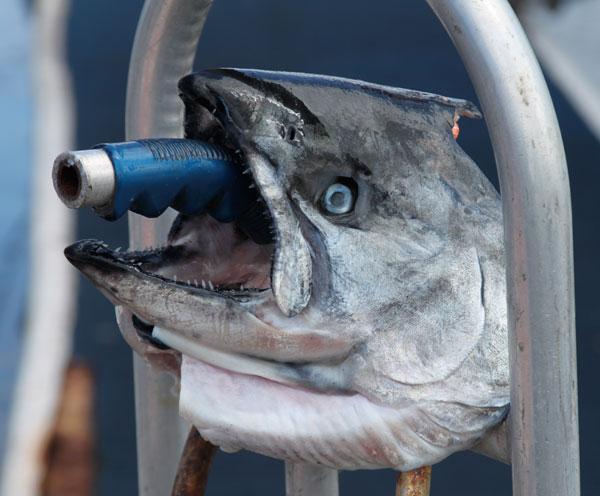 fish humor